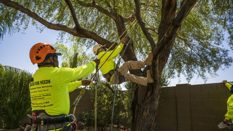 Tree Lopping And Removal Services in Perth