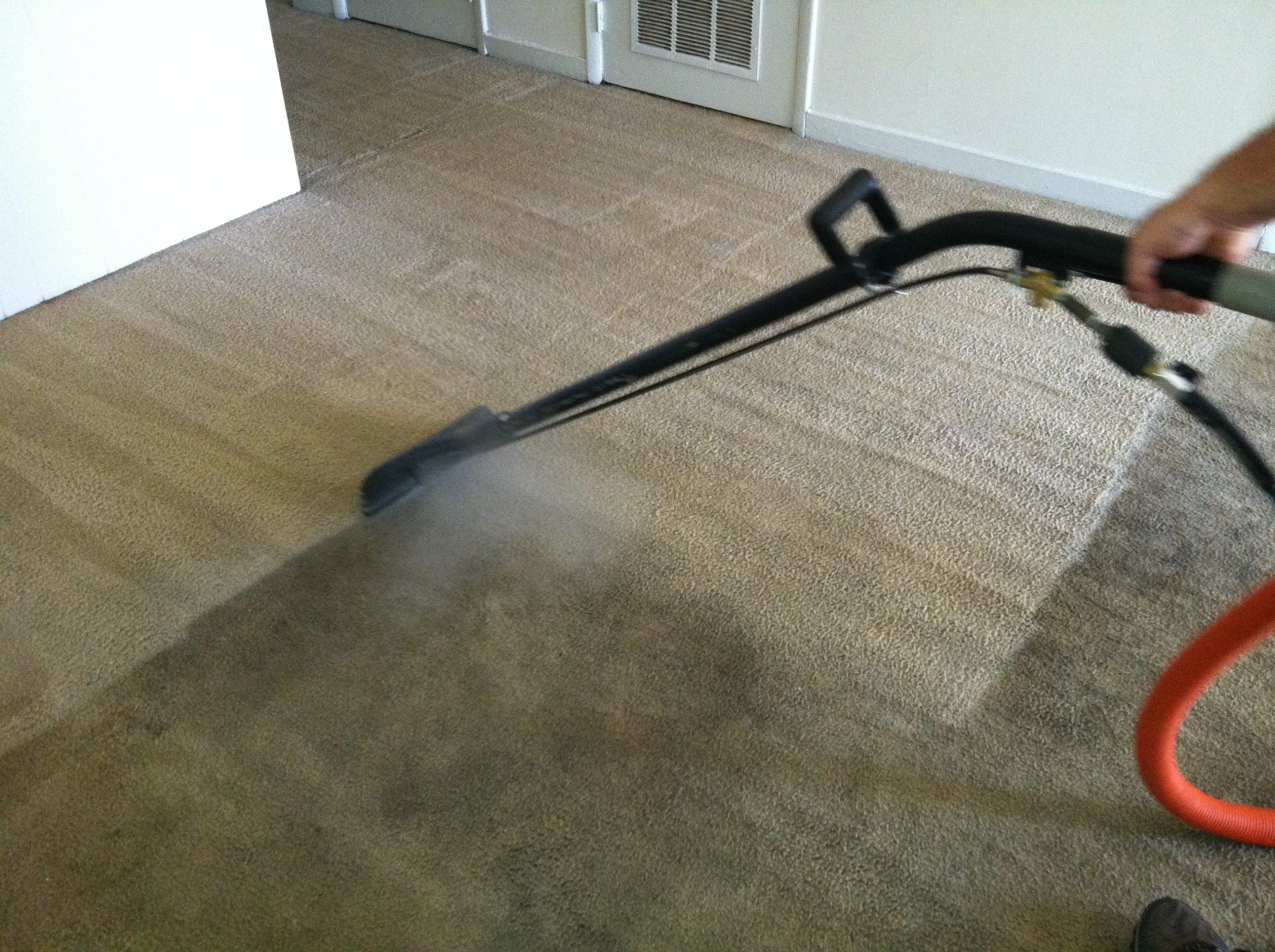 Reasons Why You Should Hire Professional Carpet Cleaning Services