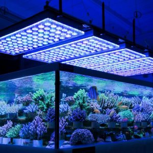 Steps to Install LED Aquarium Lighting