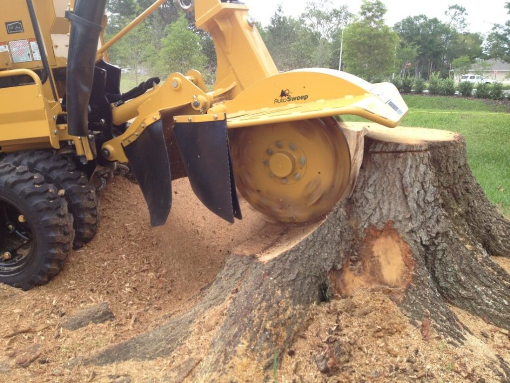 Tree Trimming And Stump Removal Services