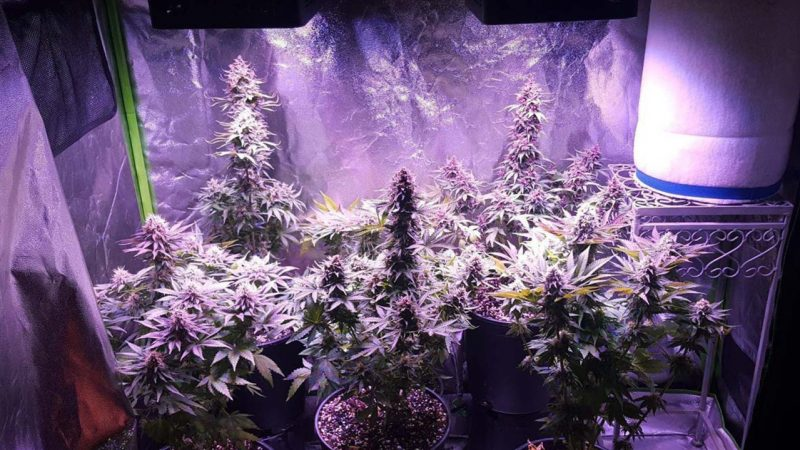 One Thing to Be Careful of With Grow Lights