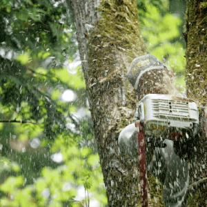 Most Common Tree Removal Mistakes