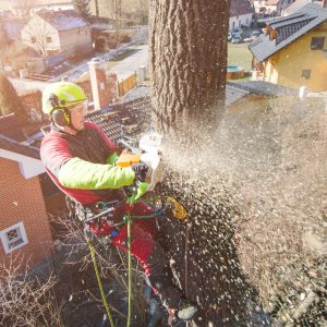 An Underrated Benefit of Professional Tree Service