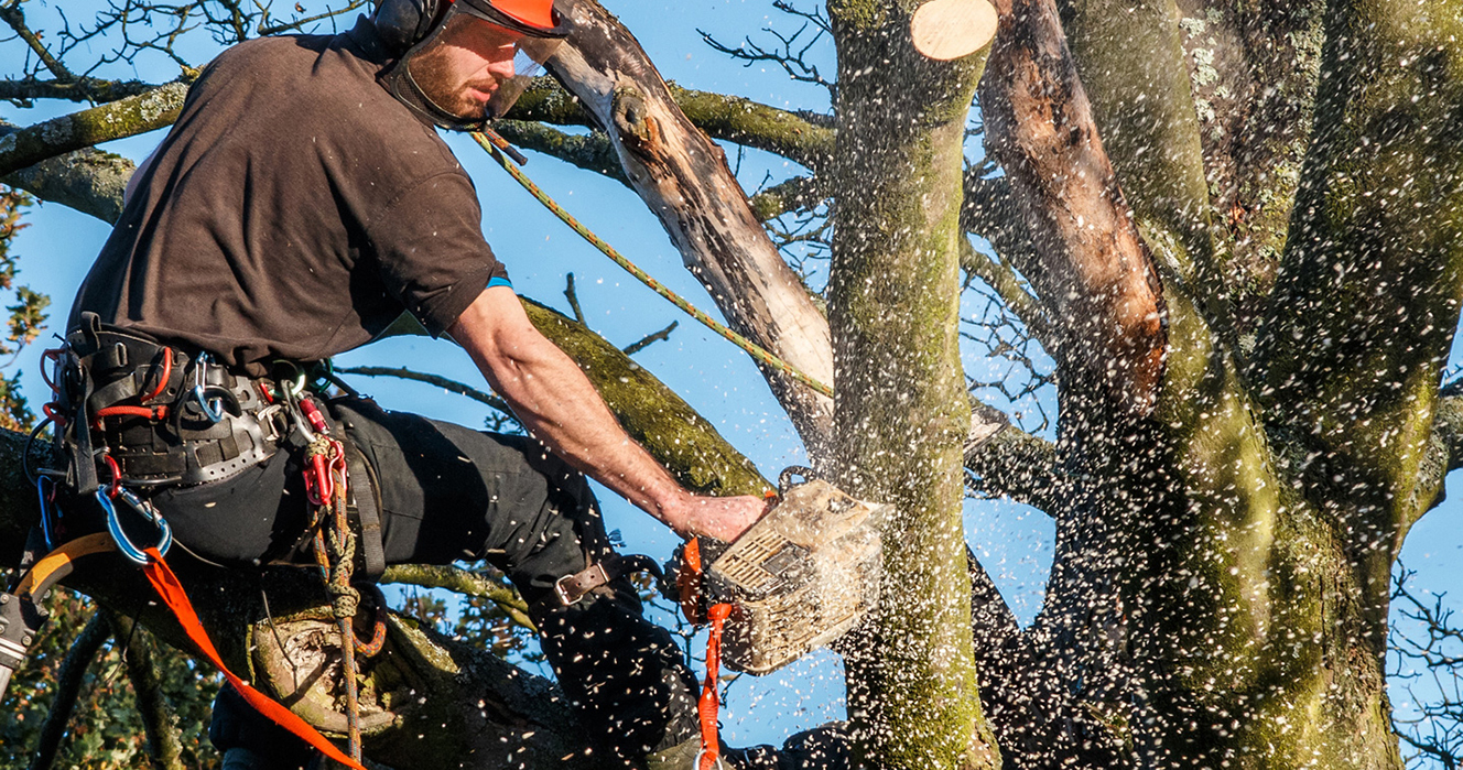 Questions You Should Ask When Hiring a Tree Service