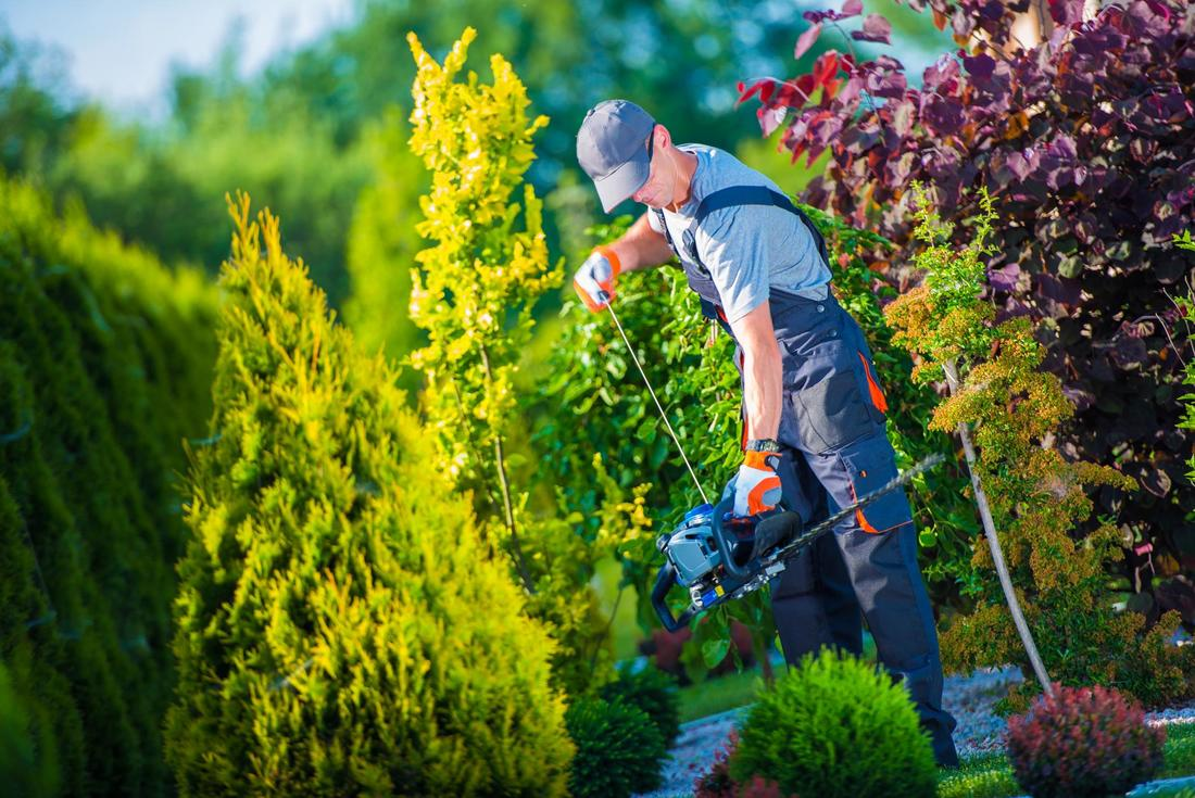 How Tree Service Can Help Make Your Tree Healthier