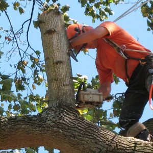 Things to Consider Before Hiring a Tree Removal Service