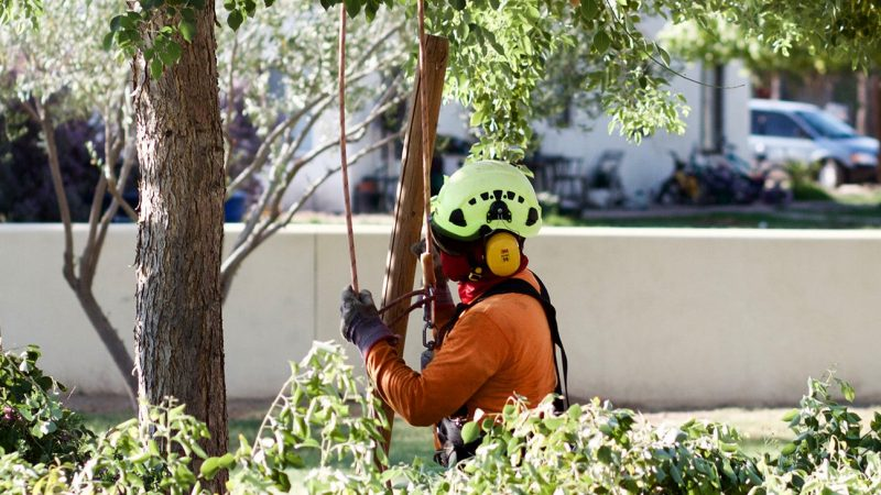 The Importance of Tree Pruning During The Summer