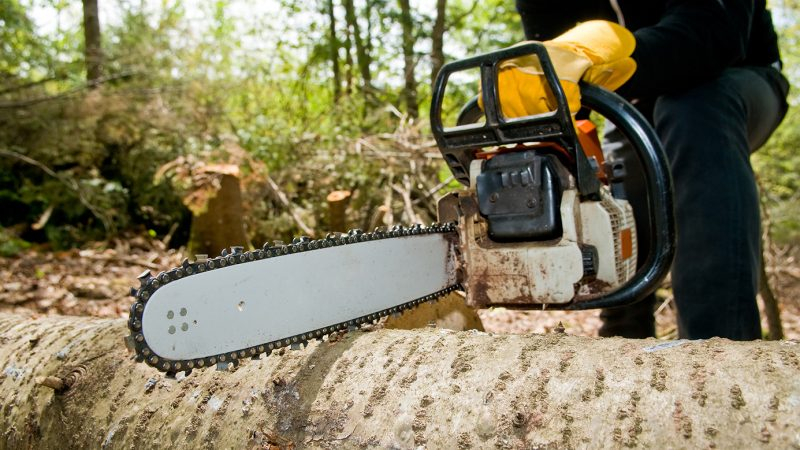 Maximizing Property Value With Tree Removal