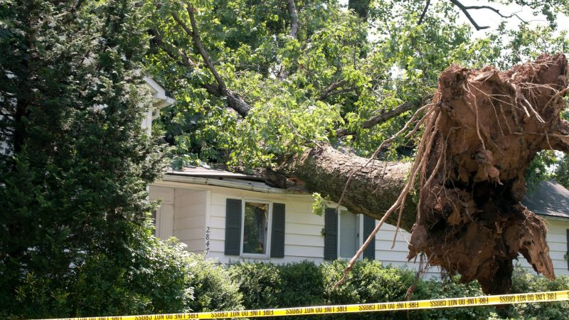 Prepare For Storms With Tree Removal