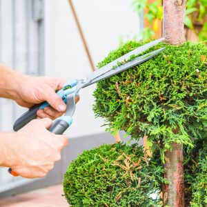 Tree Trimming: A Look at The Benefits