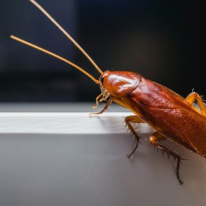Avoid Making These Mistakes When Dealing With a Cockroach Infestation
