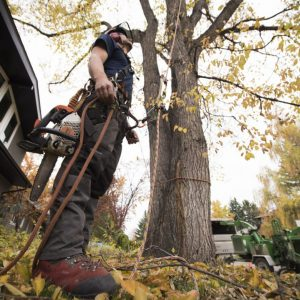 Benefits of a Having a Good Tree Service